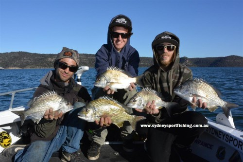 1Hawkesbury river bream