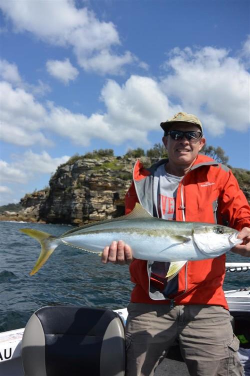 big kingfish