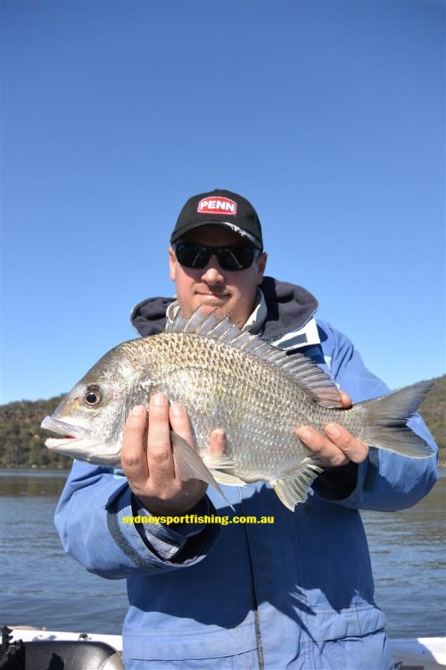biggest bream sydney