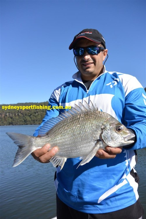 bream on lure