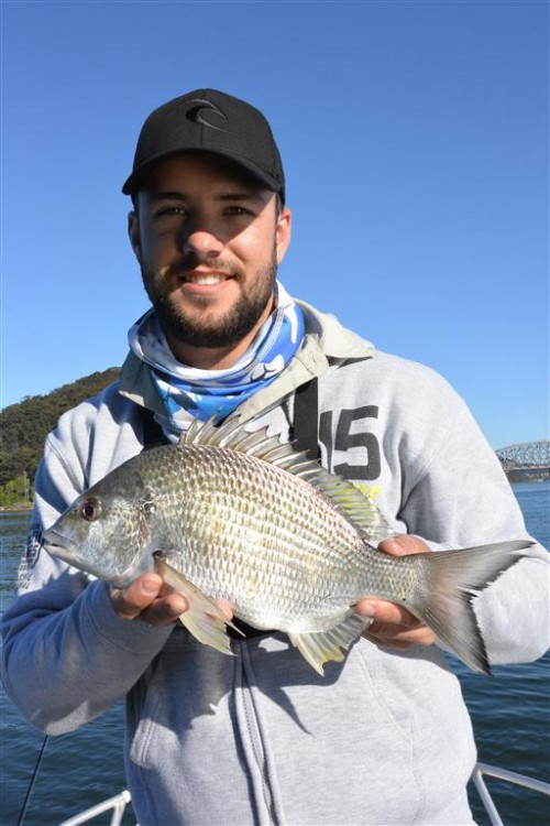 broken bay bream