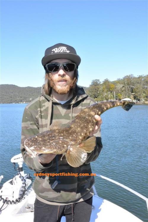 dusky flathead sydney sportfishing