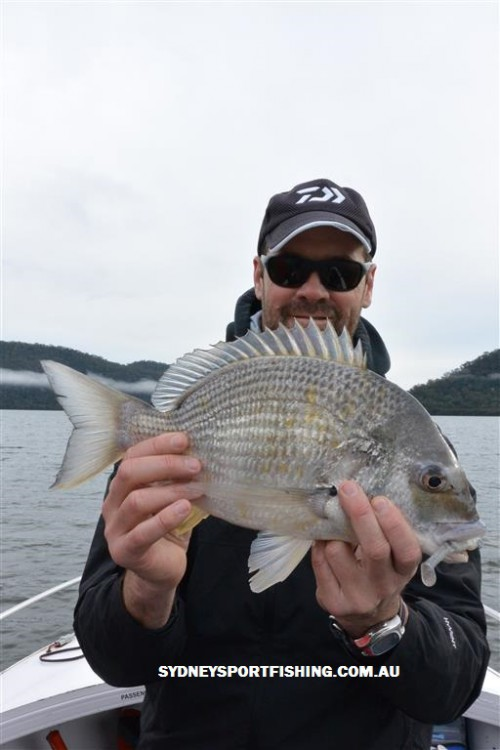 hawkesbury bream