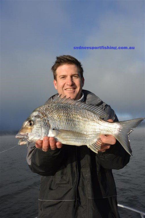 hawkesbury river Bream