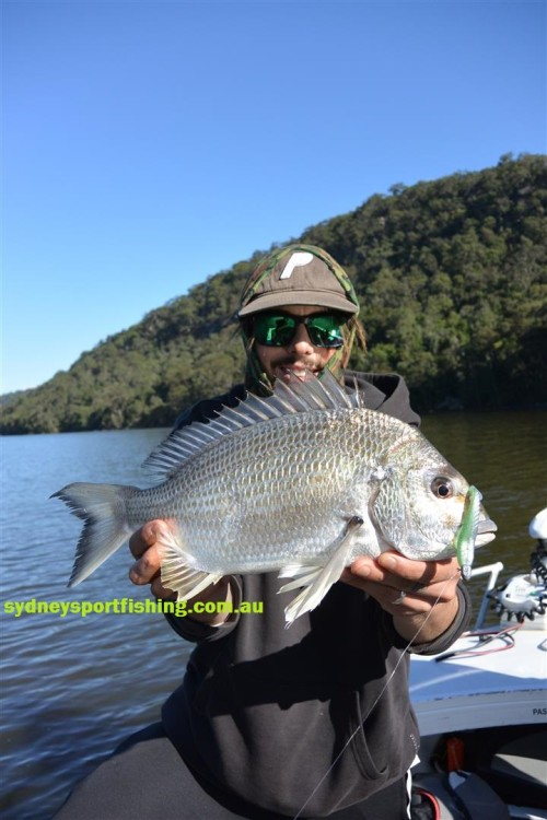 huge bream hawkesbury