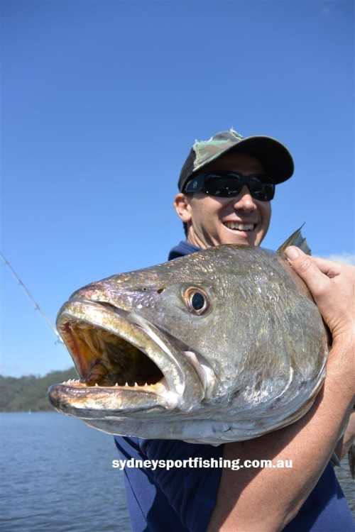 huge jewfish sydney