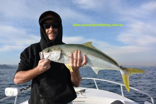 kingfish sydney