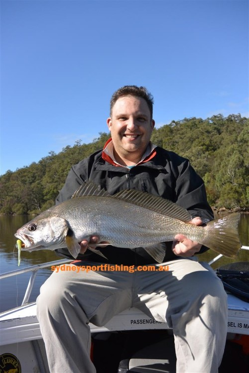 lure mulloway
