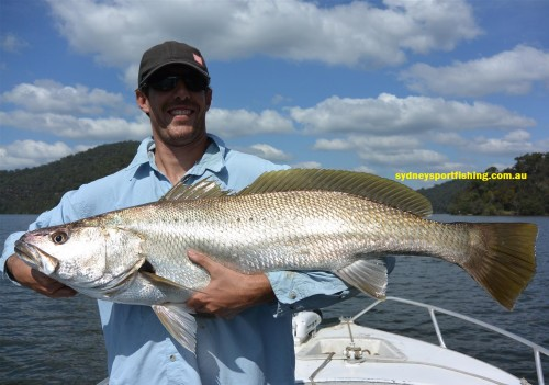 monster mulloway