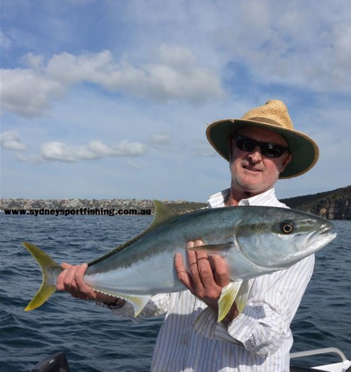 fishing charter kingfish