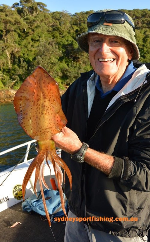 southern calamari