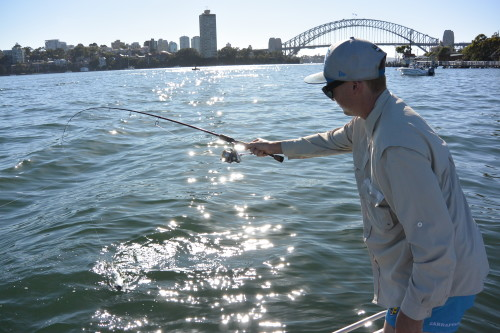 sydney harbour bridge fishing