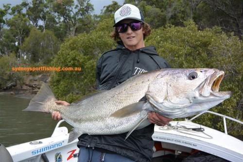 sydney jewfish on lures