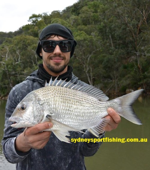 sydney sportfishing adventures