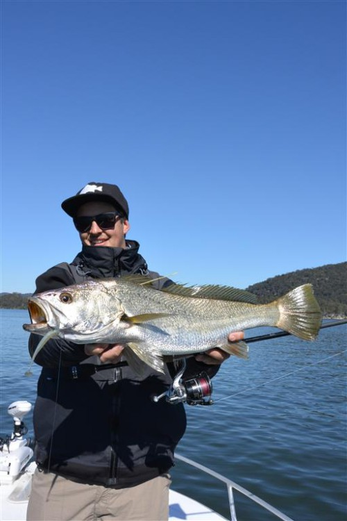tag and release mulloway