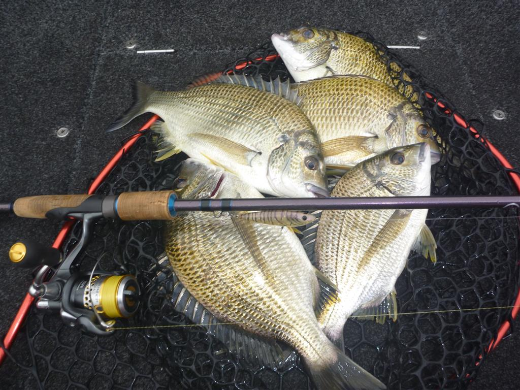 bream-on-lures