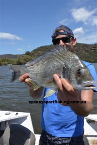 The Hawkesbury river is home to some massive Bream.