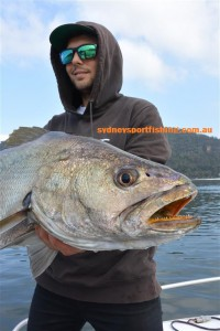 Some impressive Mulloway have been caught on lures and bait in recent weeks.