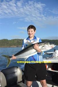 sydney kingfish