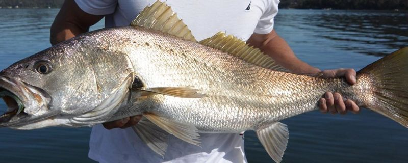 Mulloway fishing Sydney